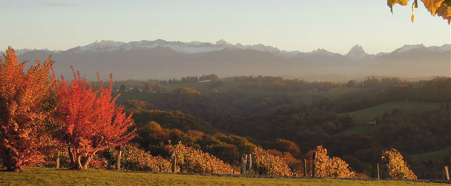View of snow capped mountains autumn leaves.