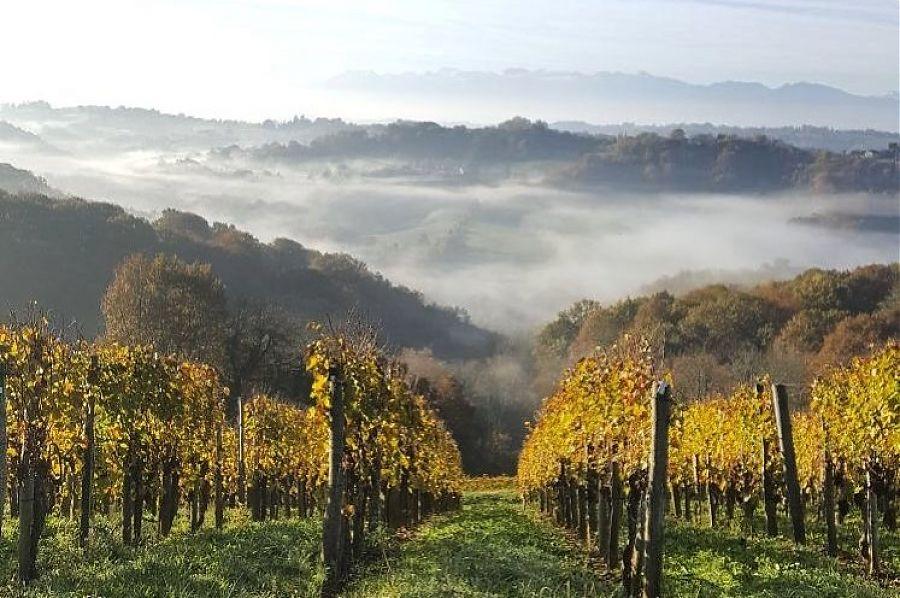 Vue sur les montagnes et vignes de jurancon.