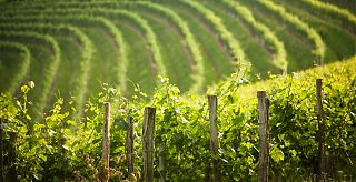 Magnificent views of vineyards