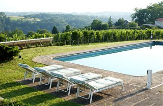 The pool and vineyard