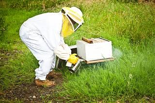 André avec ses abeilles